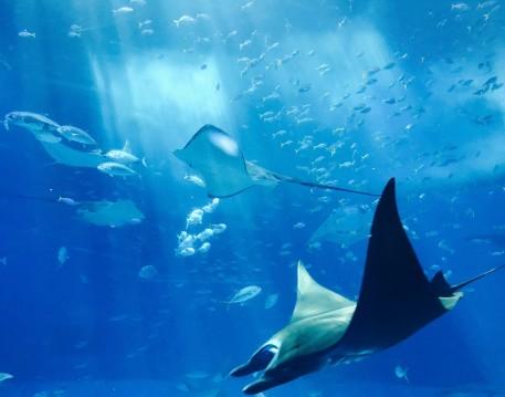 Marine/Underwater Life