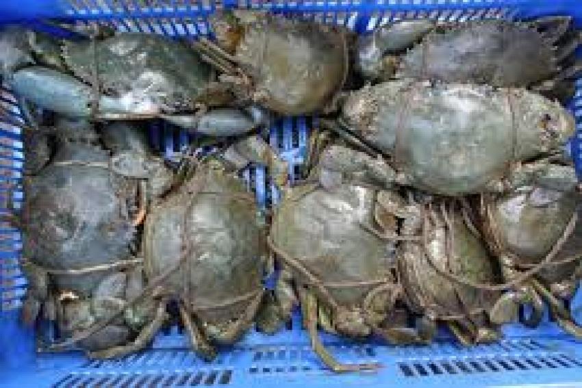 Indian crabs